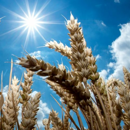 Sunlight Rapidly Destroys Coronavirus -recent study reveals